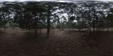 Overcast_Woods_Thumb